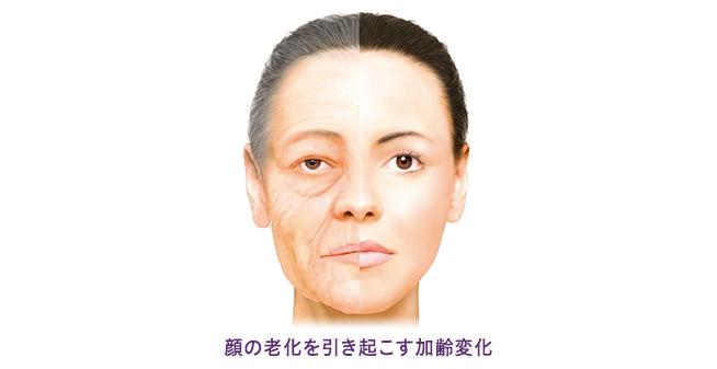 老化のメカニズム